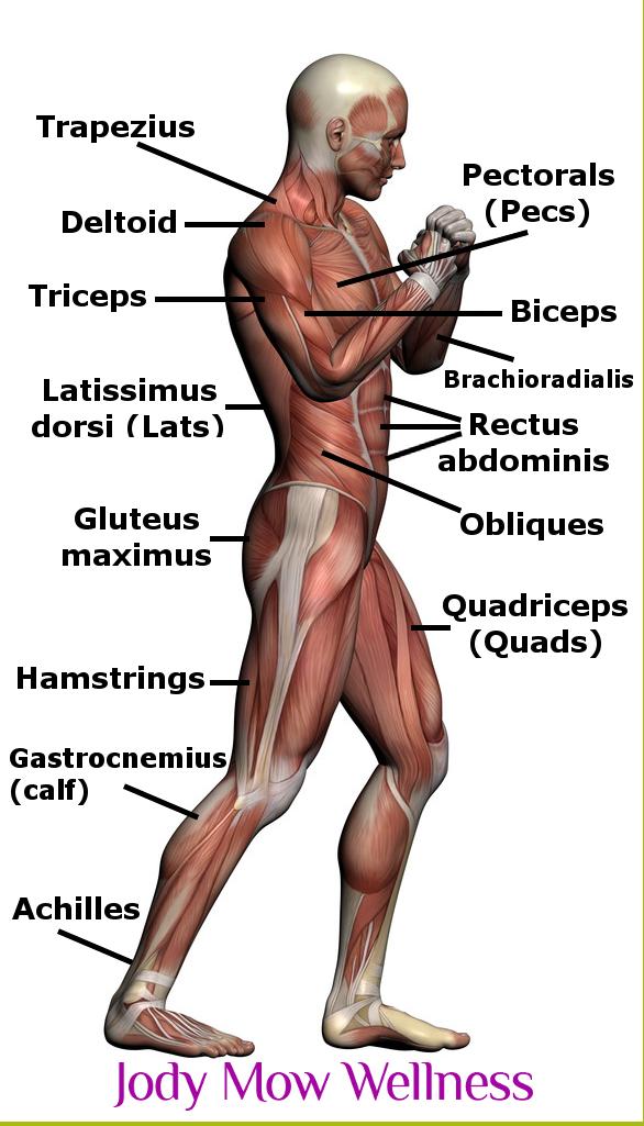 exercises | Jody Mow Wellness