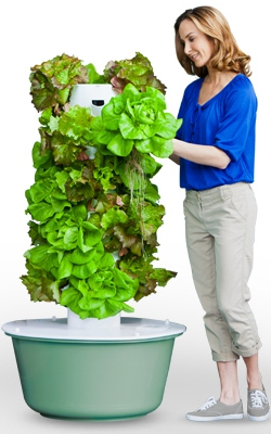 Picture of Tower Garden with woman